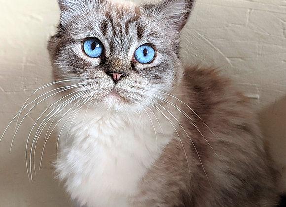 Bonnie -Retired Queen