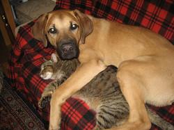Jimmy und Garfield