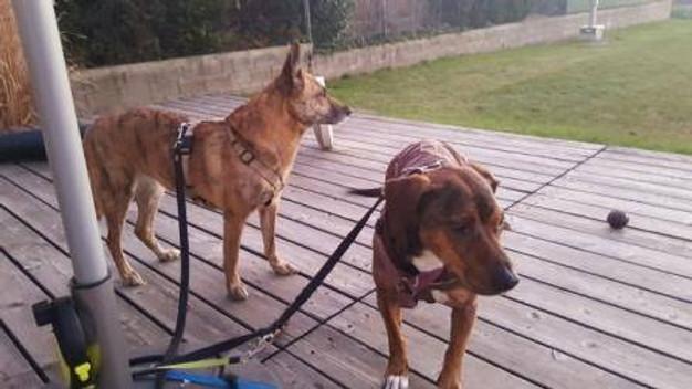Impfpass Hund Verloren