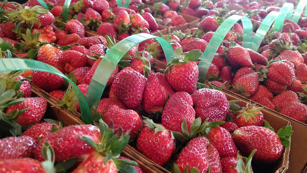 Lineberger's strawberries