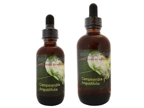 Campsiandra angustifolia is Cumanda's botanical herb name