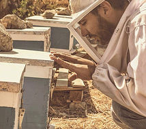 Nikos Kokolakis, beekeeper, serifos, cyclades, honey, μέλι, σερίφου, κυκλάδων