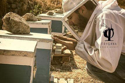 Frygana, Nikos Kokolakis, serifos, beekeeper, cyclades, μέλι, σερίφου, κυκλάδων