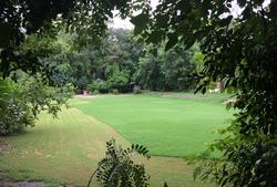 Lawn in Monsoon Season