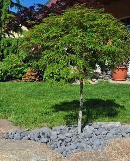 Lávové oblázky pod stromem