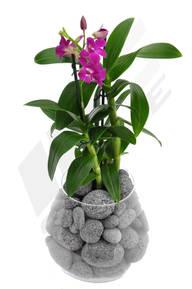 MC Stone lávové kameny - orchidej malá
