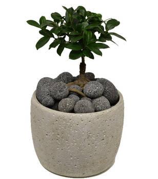 MC Stone lávové kameny - bonsaj