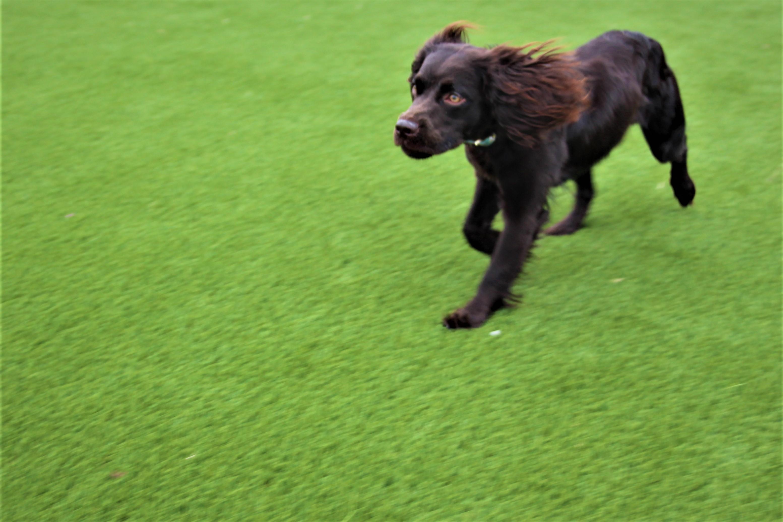 doggierunning