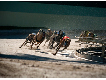 Irish Greyhound Racing Lobby Absolutely Freaking Out Over New Textbook Addition
