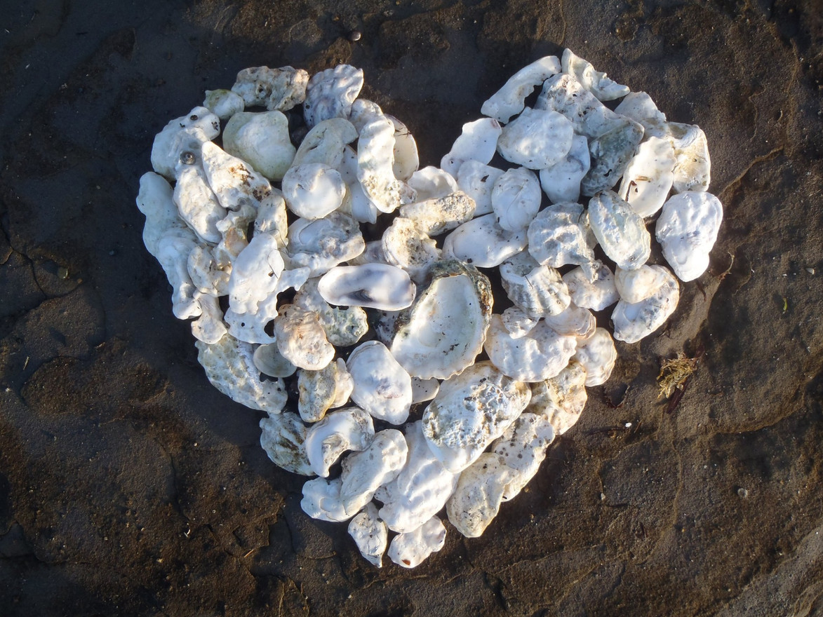 Oyster Shell HeART by Susan Pederson