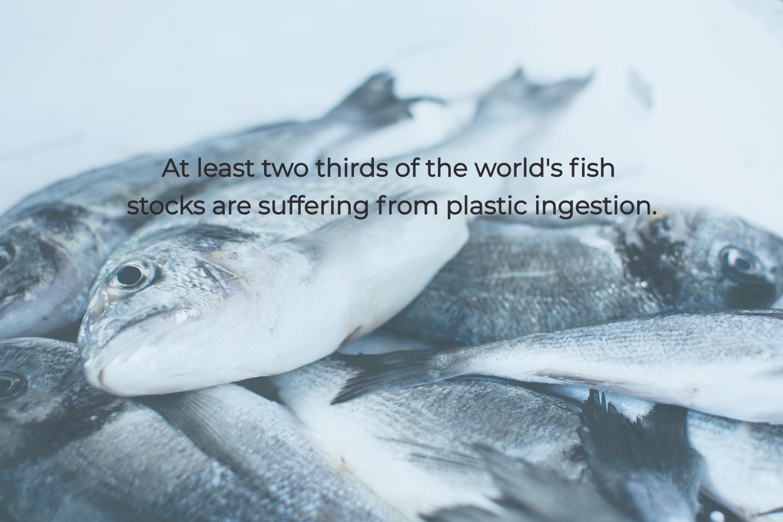 Fact image 4