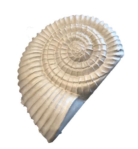 """Under the Sea"" Perisphinctes Shell"