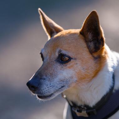 Zeb adoption photos PACT Oct 2018-5.jpg