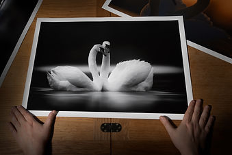 Swan prints all pop shot-5.jpg
