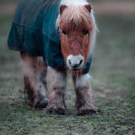 Pony cute full.jpg