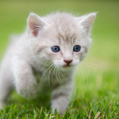 Cinemon kitten.jpg