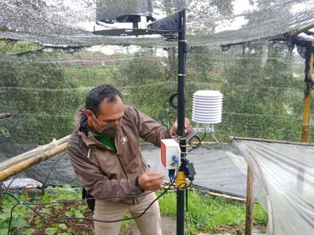 Demo IoT Automatic Weather Station Mertani di Perkebunan Wasabi, Banjarnegara