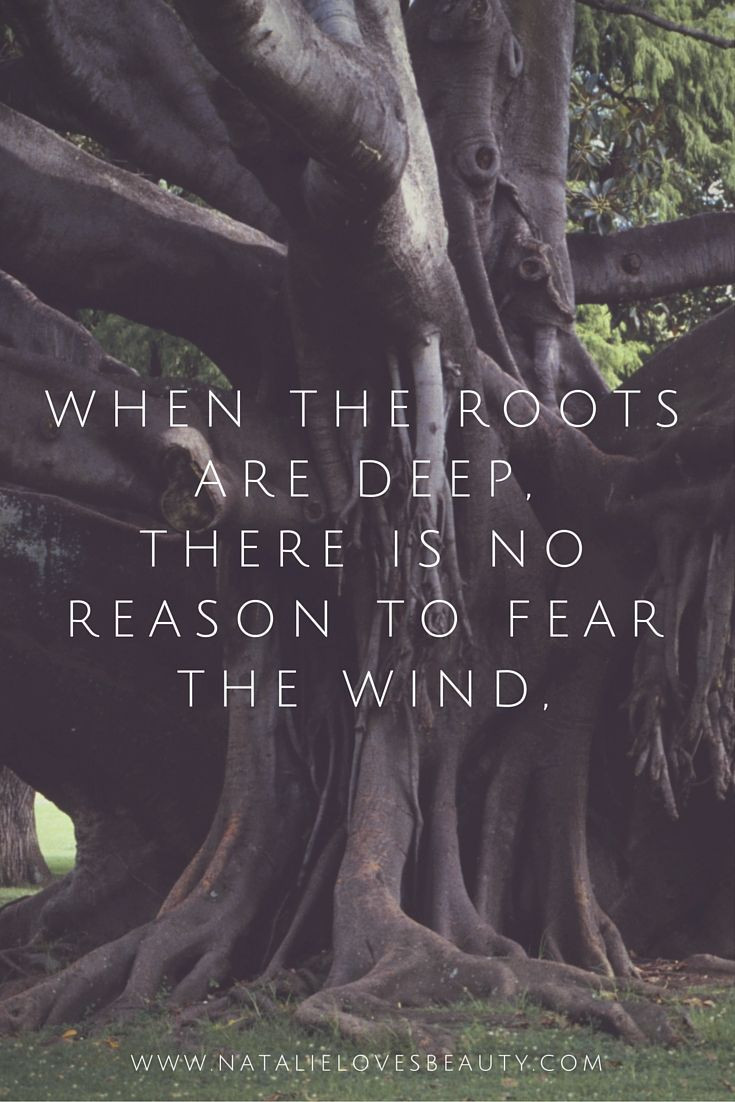"""""""When the roots are deep, there is no reason to fear the wind""""..."""