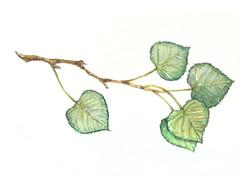 """""""Aspen Leaves"""""""
