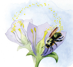 "Fig. 2: ""Role of animal pollinators"""