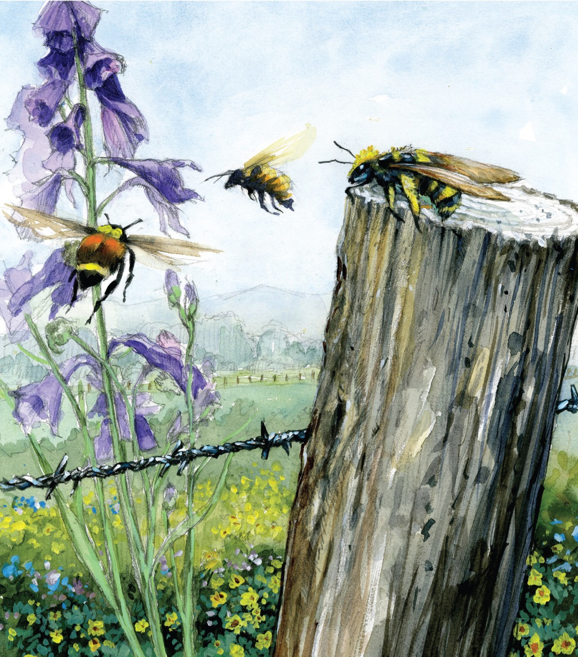 "Cover Image: ""Native pollinators"""