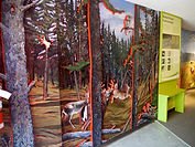 Boreal to prairies biodiversity mural by artist Doug Driediger for Elk Island National Park