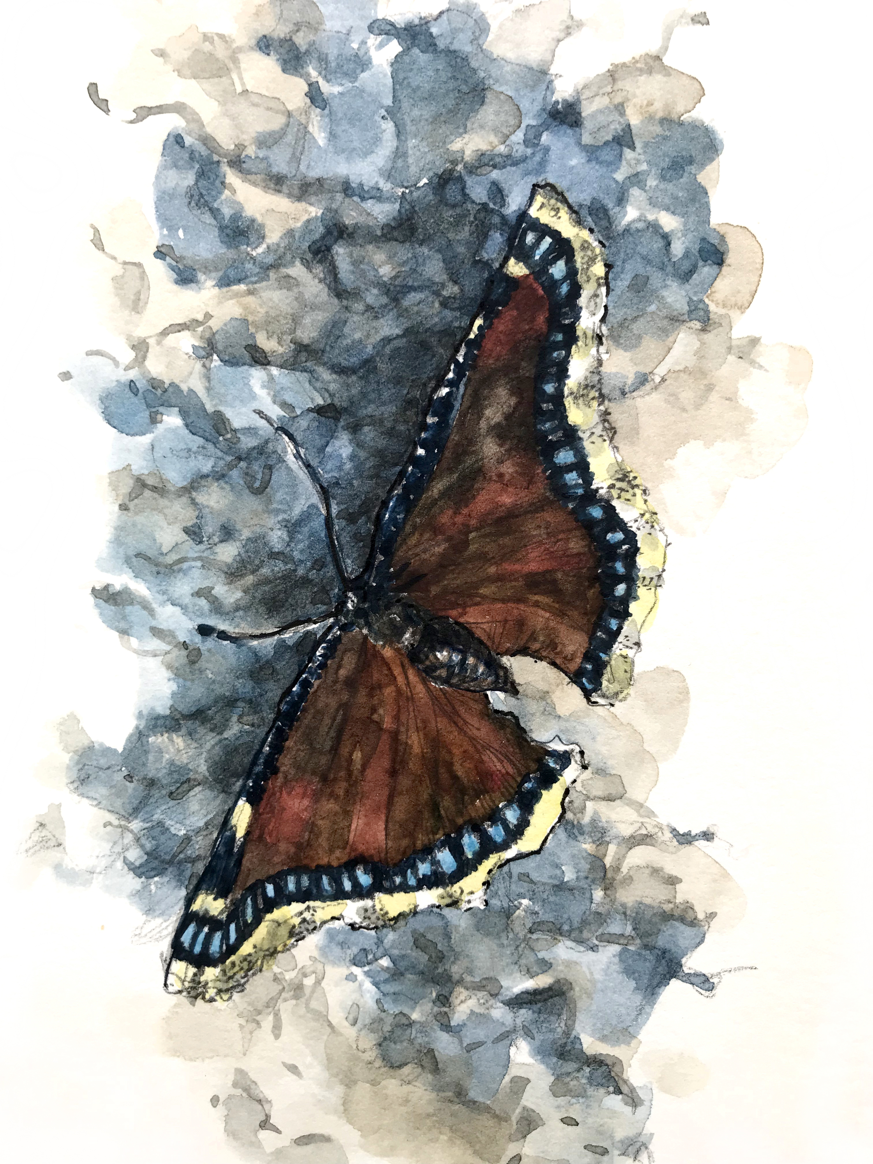 """Mourning Cloak Butterfly"""