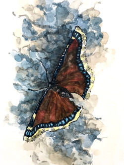 """""""Mourning Cloak Butterfly"""""""