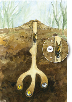 """Fig. 11: """"Typical soil nest"""""""