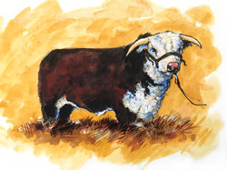 """""""Prize Bull"""""""