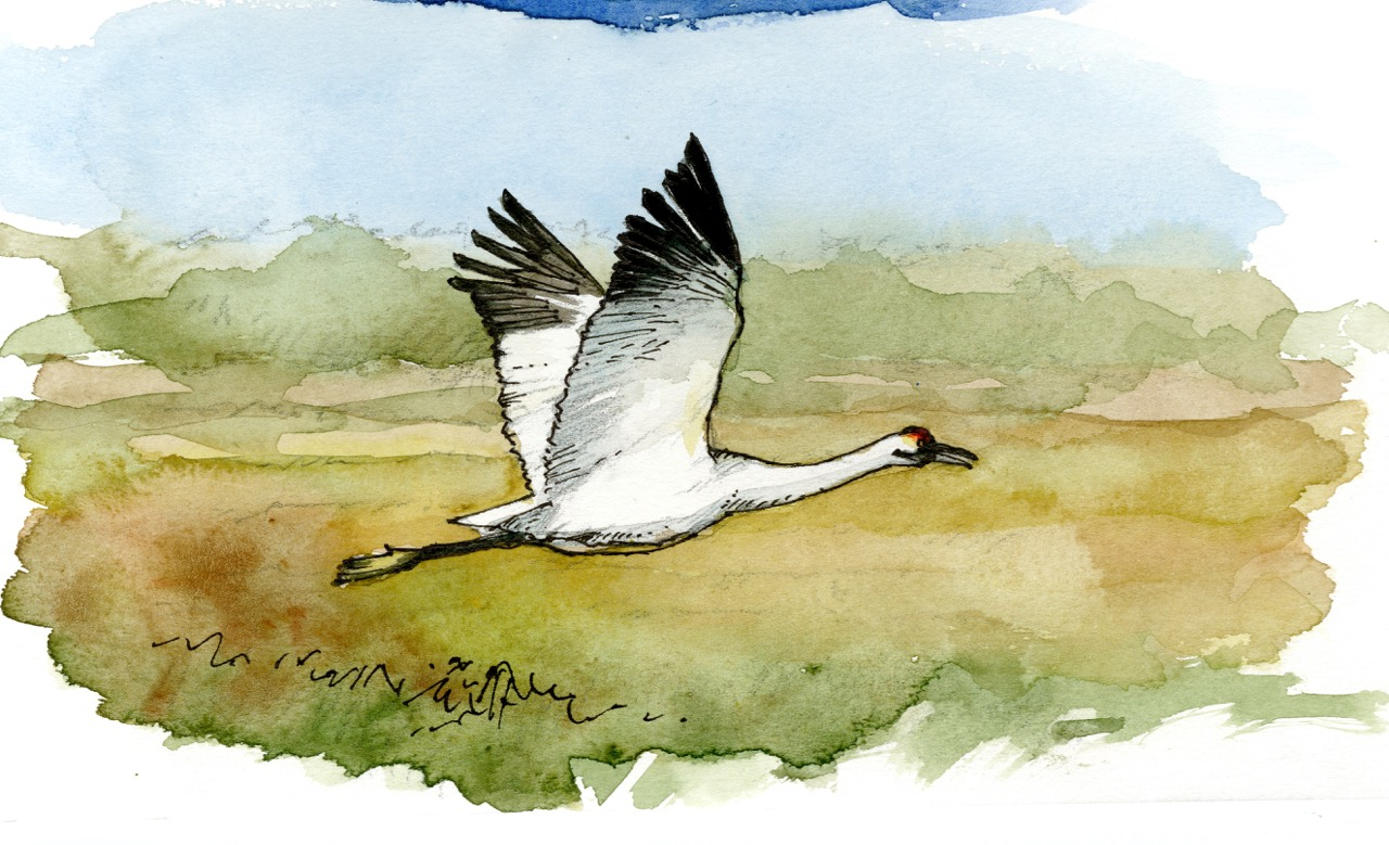 """Swan"""