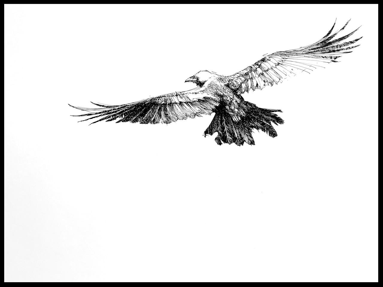"""Noah's Raven"" (study)"