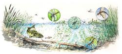 """Sulphur Lake Ecosystem"""