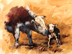 """""""Cow and calf"""""""