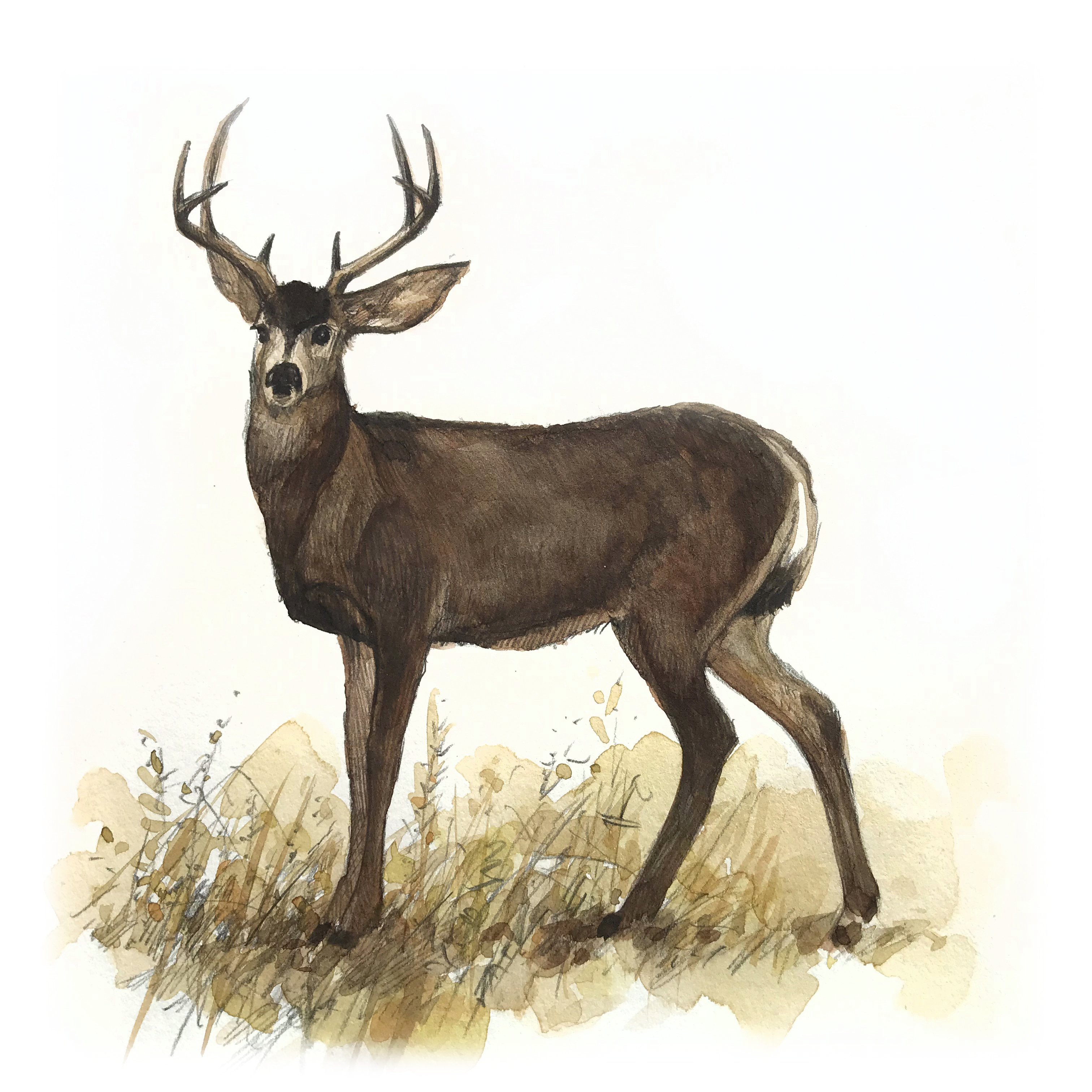 Glenbow Ranch_deer_