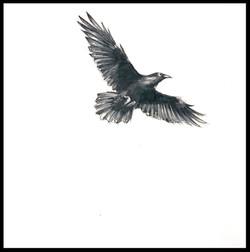 """""""Corvus Corax I"""""""