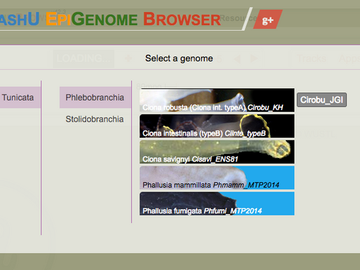 Gbrowse will soon die, get used to the new WashU genome browser.