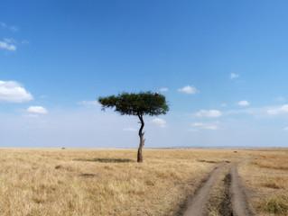 L'Afrique est magique !