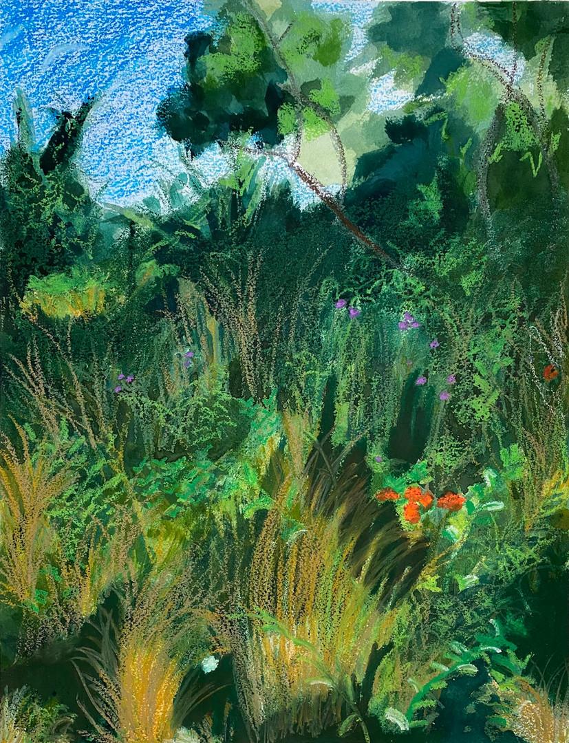 Chappaquiddick Wildflowers