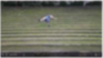 Capture d'écran 2020-05-14 à 12.14.11.