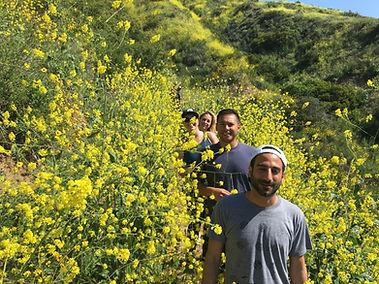 Wild Mustard in Solstice Canyon, Malibu