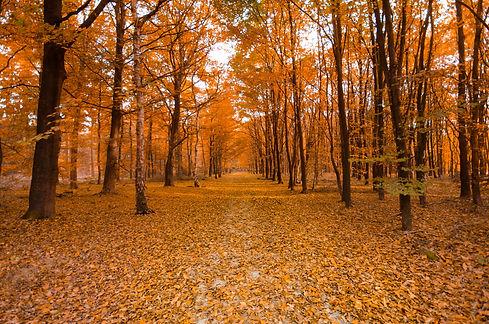 autumn-autumn-colours-branches-699624.jpg