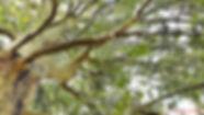 arbre la font de l'esteve.jpg