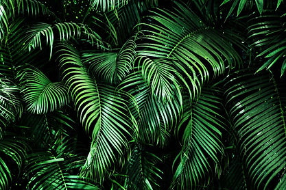 Tropical palm leaves, floral pattern bac