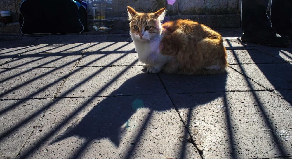 A street cat sitting next to fishermen in Ortakoy