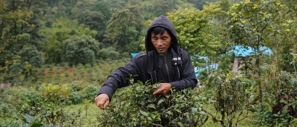 Nyan Aye, 53 years old farmer working in