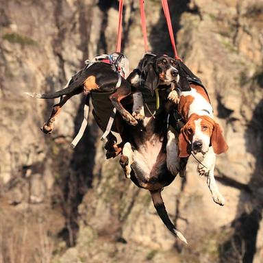 Héliportage de 3 chiens
