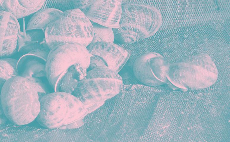 Groupe escargots