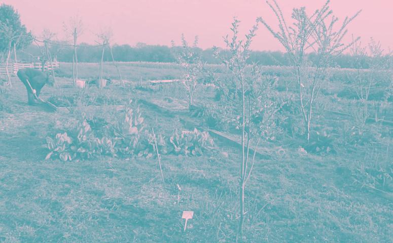 Groupe Forêt-Jardin