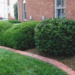 Newburgh Lawn Care ShrubsTrimmedAfter.JPG